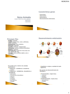 Triblásticos : endoderma, mesoderma e ectoderma