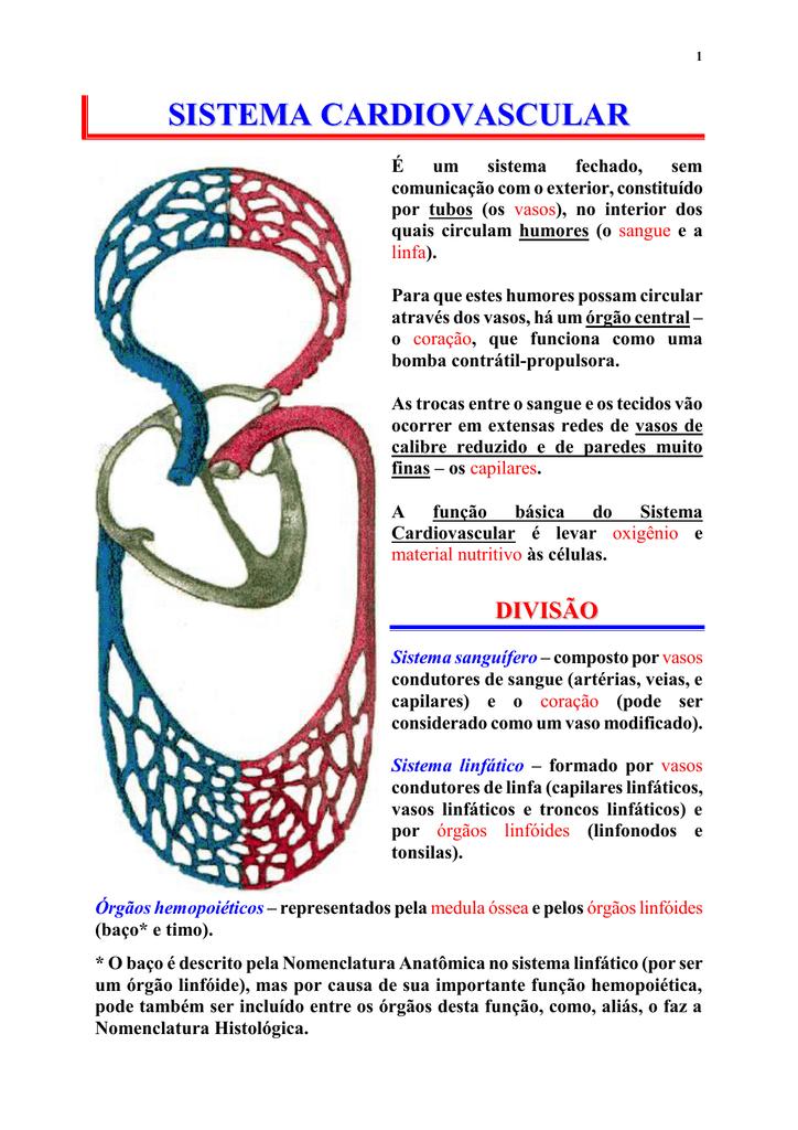 função da veia subclávia no sistema linfático