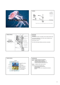 filo cnidaria - Google Groups