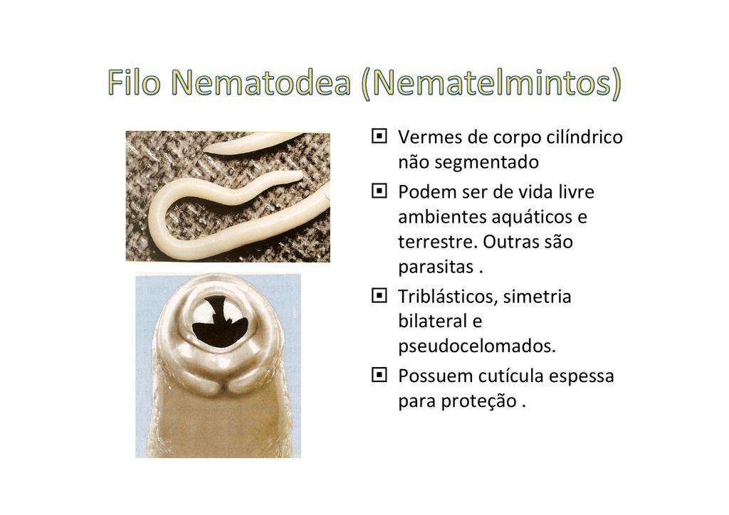 filo nemathelminthes vermes cylindricos)