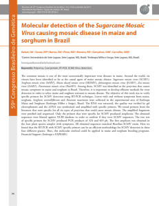 Molecular detection of the Sugarcane Mosaic Virus causing mosaic