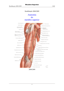 Anatomia do membro superior - Counter