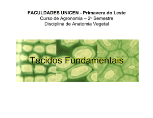 Tecidos fundamentais