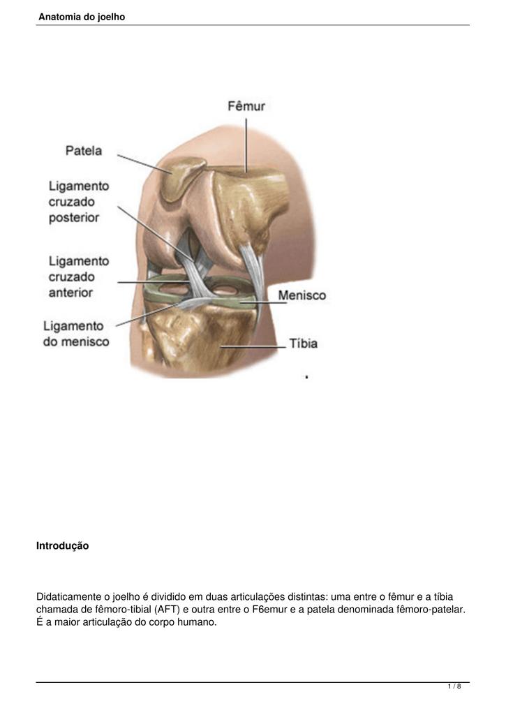 Atractivo Anatomía Posterior Del Ligamento Cruzado Adorno - Imágenes ...