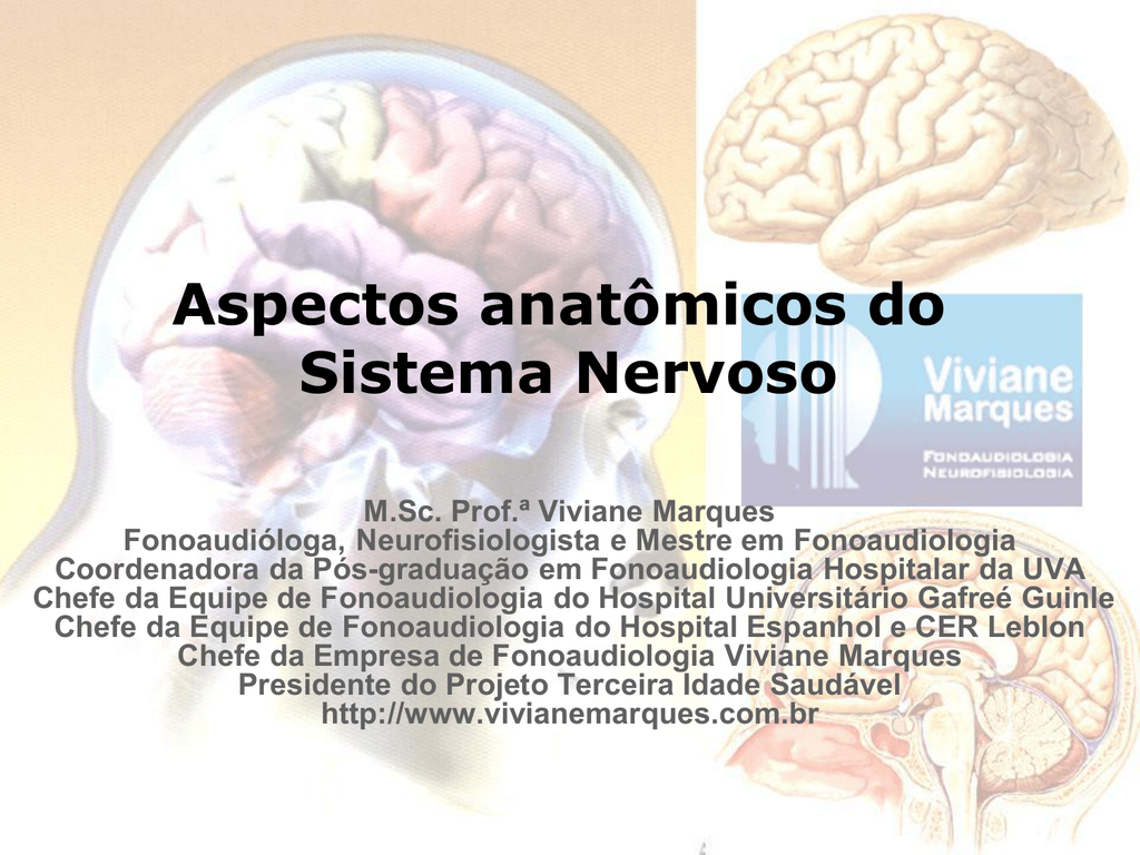Aspectos Anatômicos Do Sistema Nervoso
