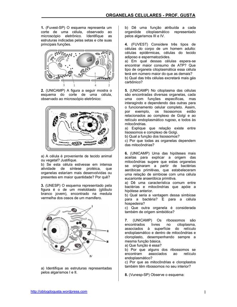 Lista De Exercícios Organelas Citoplasmáticas Biologia