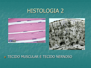 Slide 1 - Colégio Machado de Assis
