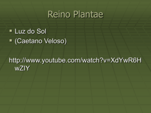 Reino Plantae - WordPress.com