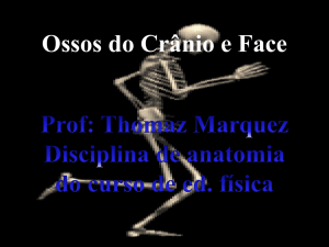 Ossos do Crânio e Face ESQUELETO