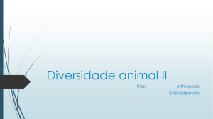slides Diversidade Animal II