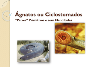 Ágnatos ou Ciclostomados