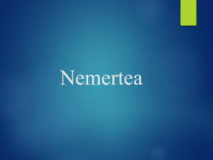 Nermetea - WordPress.com