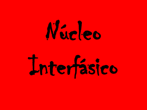 Nucleo_Interfasico