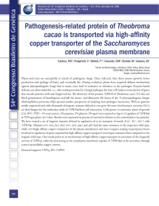 Pathogenesis-related protein of Theobroma cacao is transported via