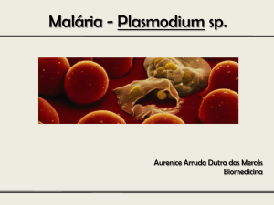 Malária - Plasmodium sp.