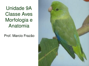 Classe Aves - Zoocordados2009