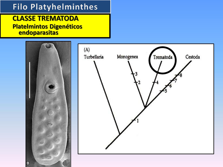 helminthosporium solani condyloma acuminata pregnancy