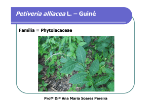 Petiveria alliacea L. – Guiné